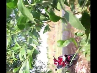 Video Vietnam xe